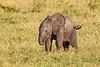Baby elephant, Seregenti National Park