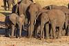 Elephant family, Tarangire National Park