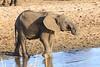 Elephant, Tarangire National Park