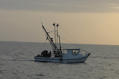 March 13, 2011 (Aransas National Wildlife Refuge / Calhoun County, Texas) - Oyster boat