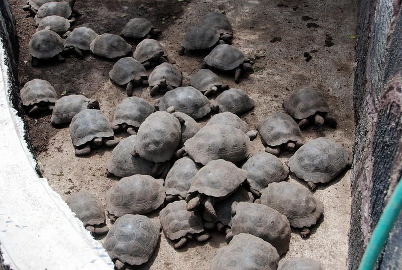DSC_3492 Turtle Pileup
