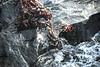 DSC_2839 Jumping Crabs