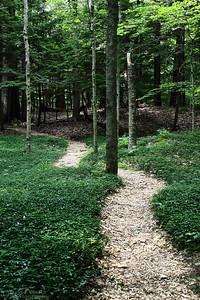 Edith Wharton's The Mount