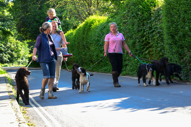 Dog walkers are a common sight