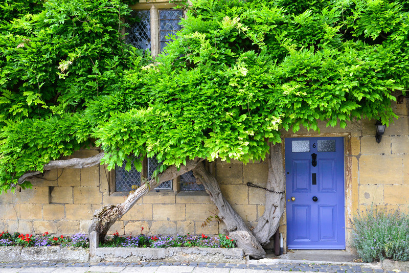 Lavender door with wisteria vine...common picture but usually will have vine blooming