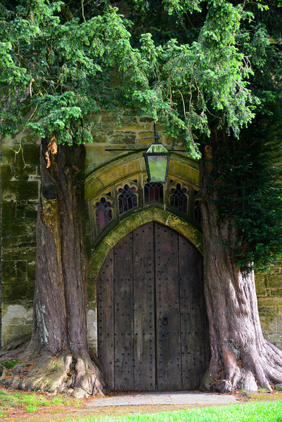 St. Edward's Church North Door Flanked by Two Yew Trees.