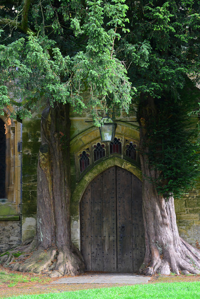 This is the north door of the Church of St Edward, flanked by yew trees, and boasting thirteenth-century moulding atop its structure. The Church of St Edward is in Stow-on-the-Wold, Gloucestershire.