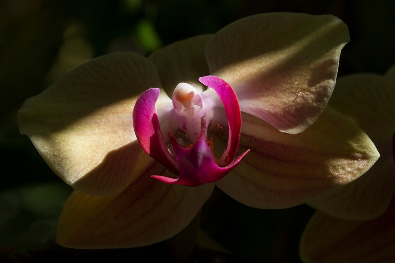 The way the orchids play hide and seek with the sun is just stunning.  This is just one of many such playful moments at The Gardens Hotel of Key West. (c)2011-2013 - The Gardens Hotel of Key West    Photo Credit:  www.miano.tv
