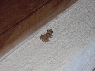 A bathroom visitor