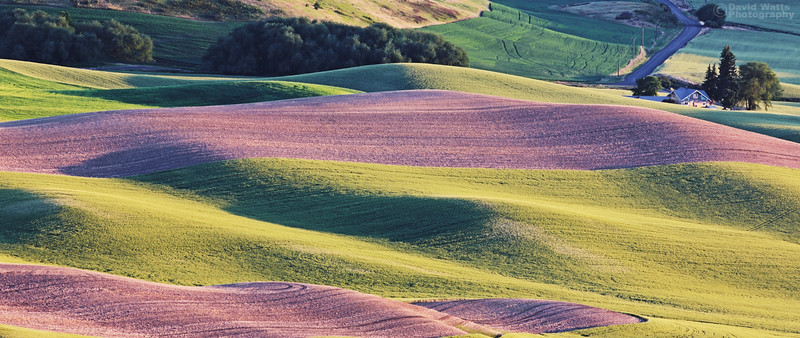 Palouse Spring Colors