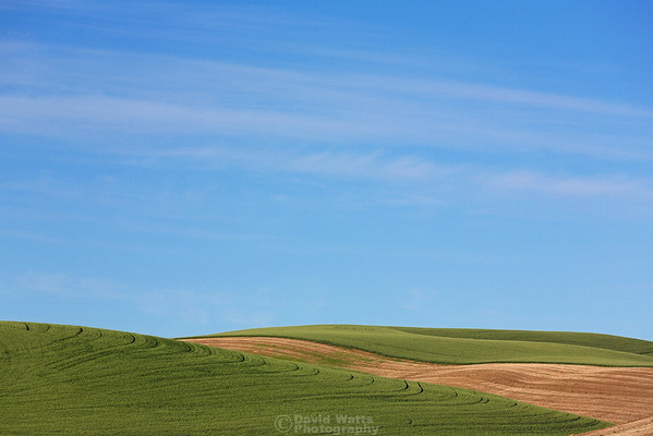 Palouse Bliss