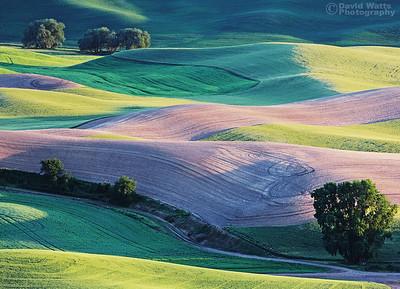 Palouse Spring Colors