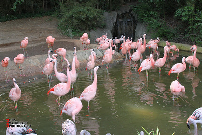 Zoo Atlanta 2012