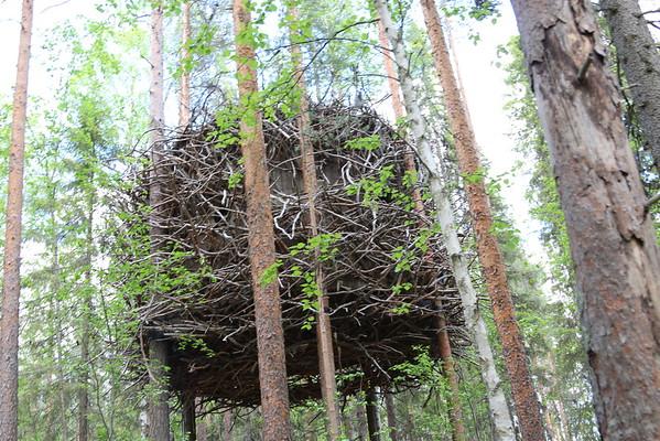 Treehotel, Sweden 2015-06