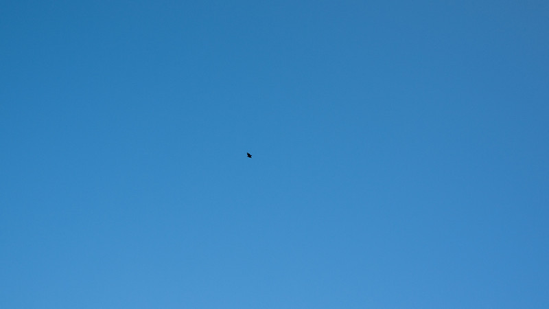 a speck of black on an endless blue sky