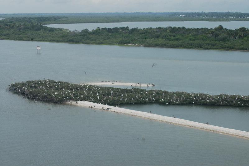 Island full of birds.