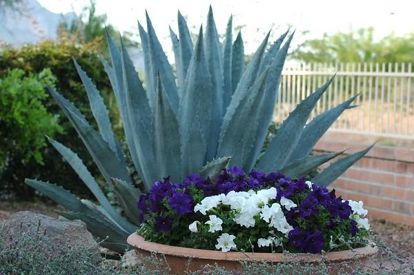 Tucson - May 2005