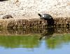 Agua Caliente Park 2