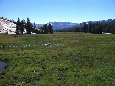 On August 11 we began our hike to Glen Aulin by walking around the end of this meadow (behind camera) and then onto an unmarked trail to the LEFT of Pothole Dome  (a short-cut told to us by a man at dinner the night before).