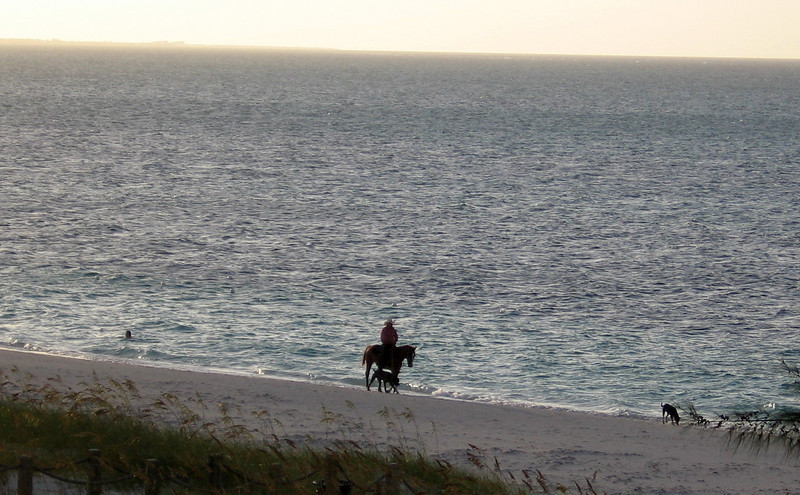 A man, his horse and his dogs took a daily stroll on the beach at sunset--what a life!
