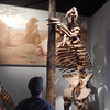 Roberto looking at Ground Sloth skeleton. The Chicago Field Museum.