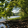 Shade along the Youghiogheny River.