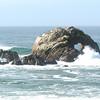 Seabird roost, Monterey, CA