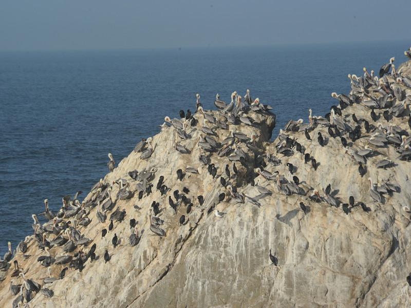 Seabird roost, Monterery, CA