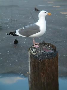 Fisherman's Wharf - Un compagno di viaggio 2004-03-02 at 02-21-36