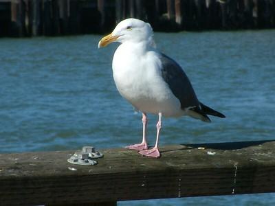 Fisherman's Wharf - Il solito compagno che ci segue anche il giorno dopo 2004-03-02 at 18-55-59