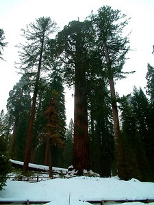 Sequoia park - Le sequoie: non Ë facile percepire la dimensione... 2004-03-05 at 22-30-00