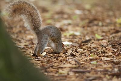Hiding peanut treasure