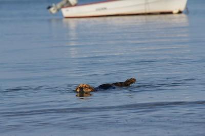 Swimming session