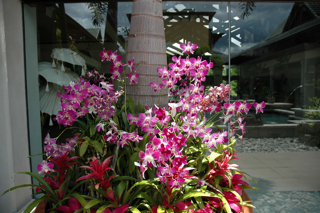 Orchids or flowers at the hotel.