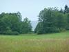 LakeThroughTrees