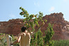 Capitol Reef has acres of orchards that were originally planted by Mormon settlers.  They maintain and make available some very nice fruit.  You can eat all you want for free..or take it out for $1 a pound.