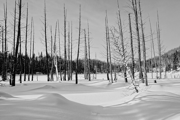 Another snow scape from vacation, I will attempt to print this one. Have a great day - JY