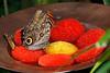 Butterfly Watering Hole - Butterfly Exhibit Henry Doorly Zoo Omaha, NE