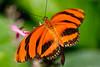 Butterfly Exhibit - Henry Doorly Zoo Omaha, NE