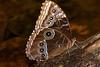 Butterfly Exhibit Henry Doorly Zoo Omaha, NE