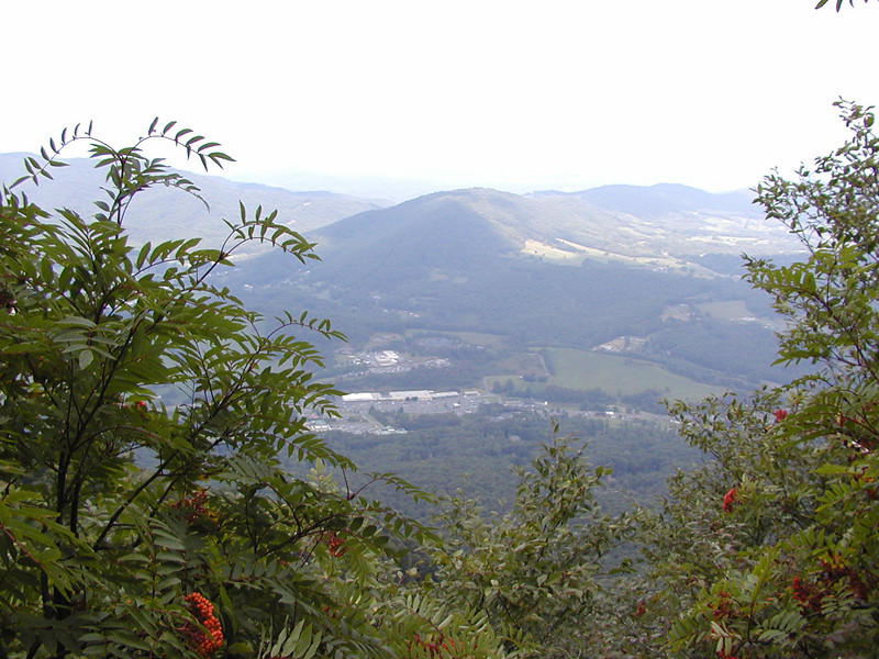 View from the summit of Mt. Jefferson through many of the mountain ash trees!