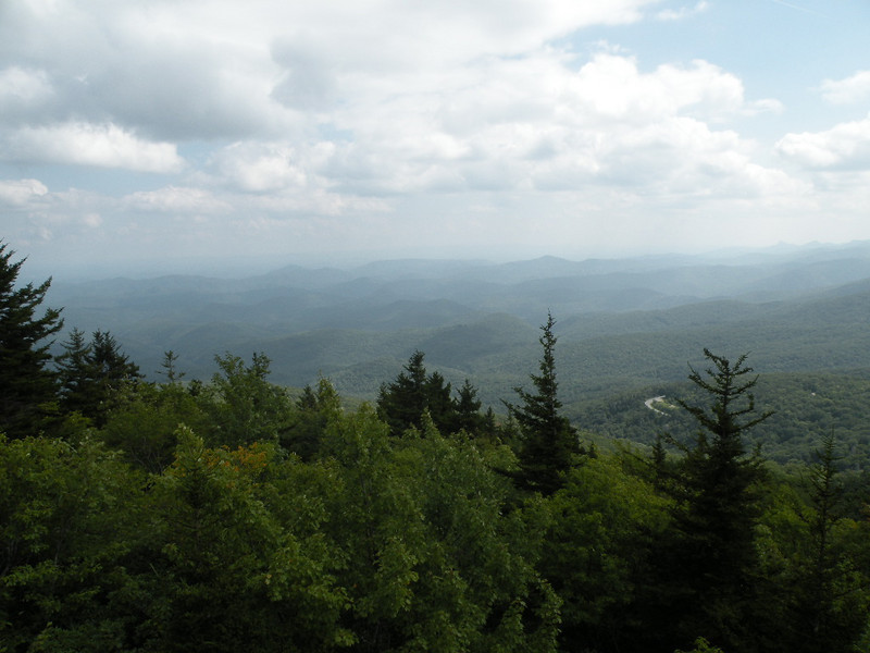 Healthy forest from Rough Ridge