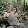 "Rock ""bridge"" over small stream just below Arch Rock<br /> Black Rock Extension Trail <br /> Grandfather Mtn. NC"