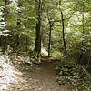 Lost Province Trail<br /> Mt. Jefferson SNA NC