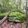 Beautiful mossy boulder along the path to Lower Falls