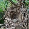 A birds nest with an egg near our hotel room.