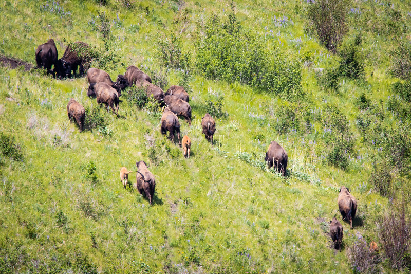 National  Bison Range