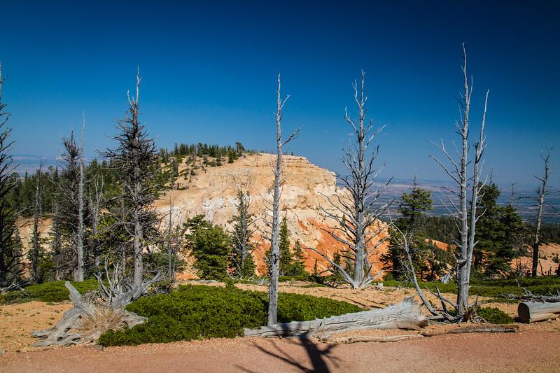 Bristlecone Loop Trail
