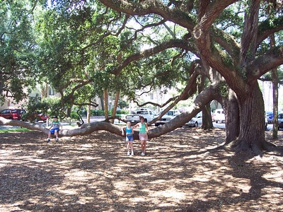 Some awesome trees in Hilton Head.