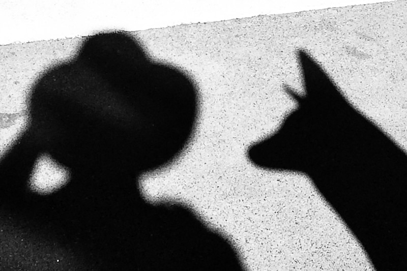 The Shadow meets Coyote VI